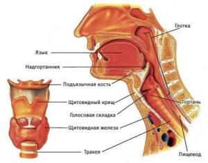 ангина виды симптомы и лечение