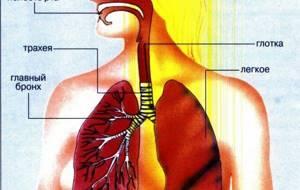 бронхит трахеит симптомы и лечение