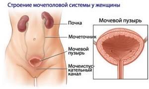 цистит после родов симптомы и лечение