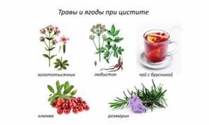 цистит симптомы и лечение травами