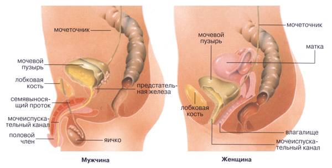 цистит симптомы лечение антибиотиками