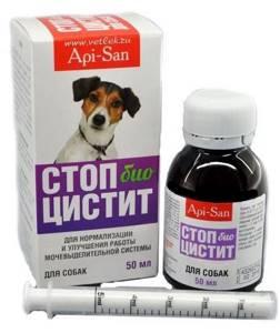 цистит у щенка симптомы лечение