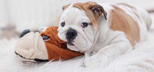 цистит у щенков симптомы и лечение