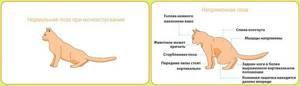 цистит у сфинксов симптомы лечение