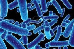 дисбактериоз от антибиотиков симптомы и лечение