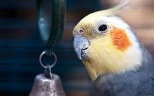 дисбактериоз у попугая симптомы лечение
