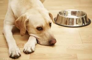 дисбактериоз у щенка симптомы и лечение