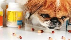 дисбактериоз у йорка симптомы и лечение