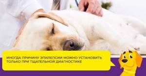 эпилепсия у мопсов симптомы и лечение