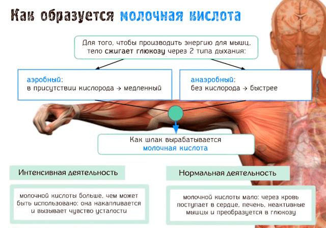 молочная кислота причины симптомы и лечение
