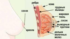 молочница груди симптомы лечение