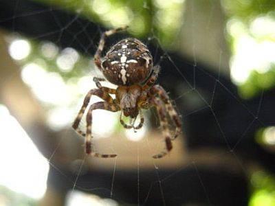 укус паука симптомы и лечение