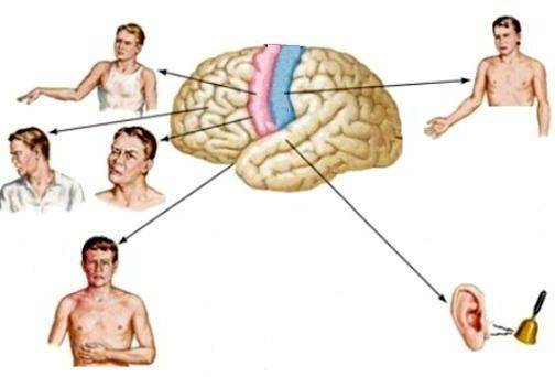 затылочная эпилепсия у взрослых симптомы лечение