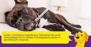 цистит у мопса симптомы лечение в домашних условиях