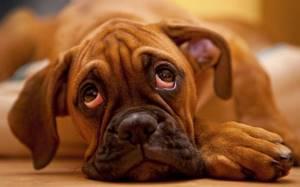 цистит у щенка симптомы лечение в домашних условиях