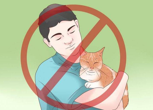 эпилепсия у котов симптомы лечение