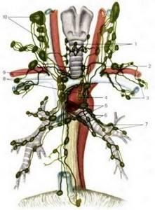 лимфаденопатия шеи симптомы лечение