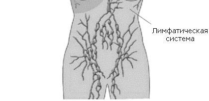 лимфоузлы в паху воспаление симптомы лечение