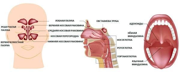 односторонняя ангина без температуры симптомы и лечение