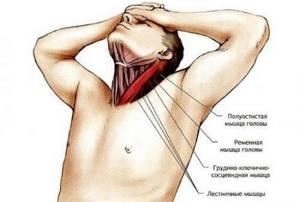 потянула мышцы шеи симптомы лечение