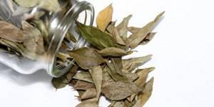 шейный и грудной остеохондроз симптомы и лечение лавровым листом