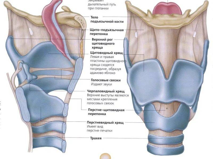 воспаление хрящей гортани симптомы и лечение
