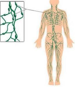 воспаление лимфоузлов на ноге симптомы лечение