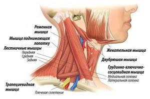 воспаление мышц шеи симптомы и лечение