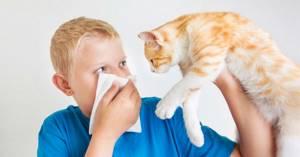 аллергия на шерсть симптомы у ребенка лечение