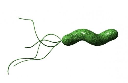 бактерия хеликобактер у ребенка симптомы и лечение