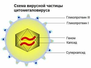 кишечная инфекция симптомы и лечение у ребенка 6 лет