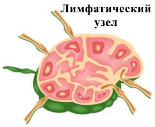 лимфаденит шейный у ребенка симптомы и лечение