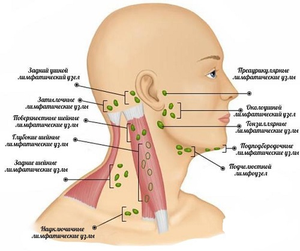 лимфоузлы на шее воспаление у ребенка симптомы и лечение