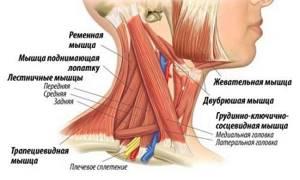 шейный миозит у ребенка симптомы и лечение