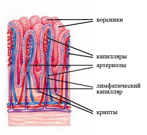 гастроэнтерит симптомы лечение у детей