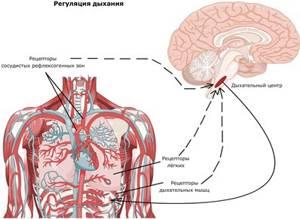гипервентиляционный синдром симптомы лечение у детей