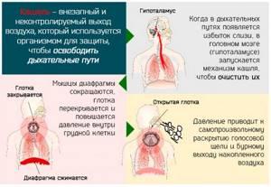 кашель симптомы и лечение у взрослых