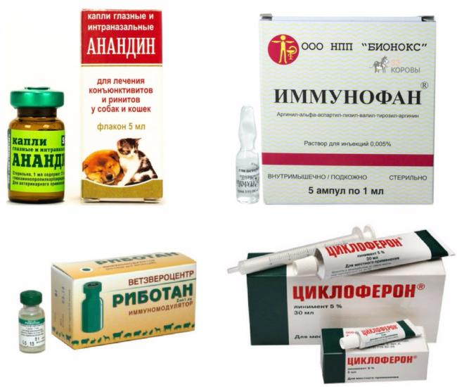 насморк у йорка симптомы и лечение