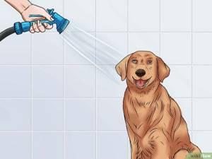 питомниковый кашель у щенков симптомы и лечение