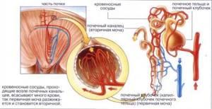 полиурия причины симптомы лечение у детей