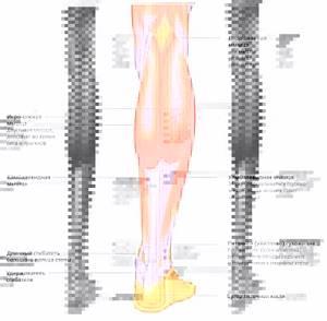 растяжение мышц ноги симптомы и лечение