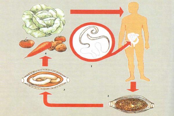 трихоцефалез у детей симптомы и лечение