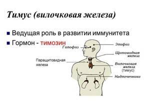 вилочковая железа у детей симптомы лечение