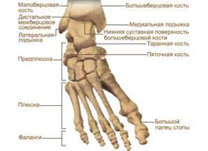 вывих ноги симптомы и лечение